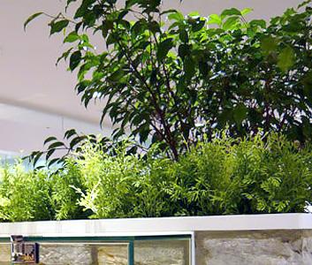 人工樹木・人工観葉植物
