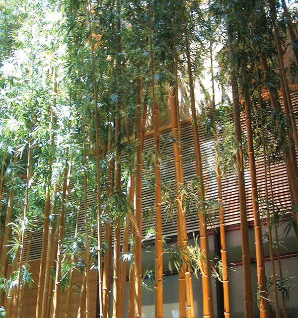 屋外用 人工竹