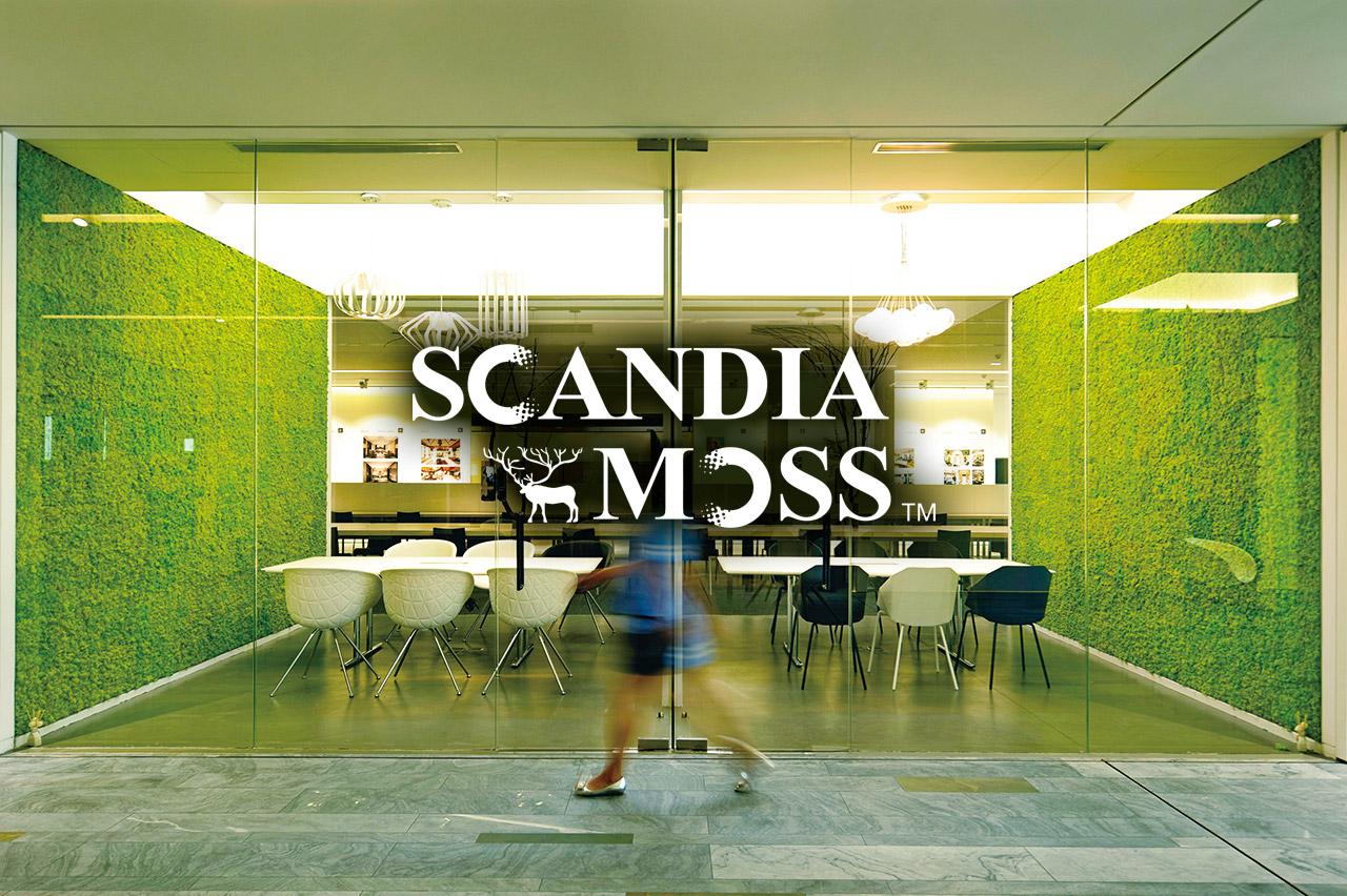 北欧の森からやってきたディスプレイグリーン SCANDIAMOSS