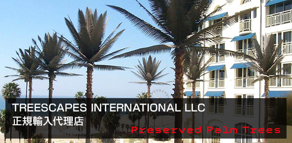 TREESCAPES INTERNATIONAL LLC 正規輸入代理店